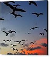Sunset Flight Canvas Print by Candice Trimble