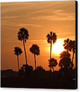 Sunset Palms 1 Canvas Print by Roger Snyder