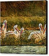 Pelicans Rest Canvas Print by Pam Vick