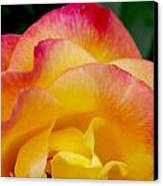 Sunset Rose At Dawn Canvas Print
