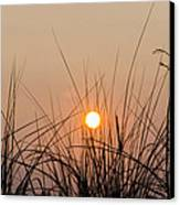 Sunset Through The Grass - Villas New Jersey Canvas Print by Bill Cannon