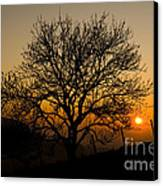 Sunset Tree Canvas Print by Anne Gilbert