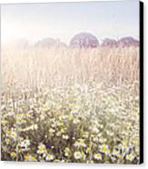 Sunshine Over The Fields Canvas Print