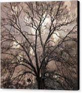 Surreal Fantasy Gothic South Carolina Sepia Oak Trees And Fantasy Bokeh Circles Canvas Print by Kathy Fornal