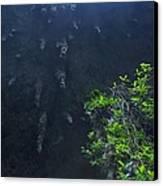 Surreal Stalactites At The Camuy Caverns Canvas Print