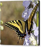 Swallowtail Butterfly 1 Canvas Print