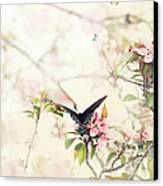 Swallowtail In Spring Canvas Print