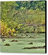 Swamp Birds Canvas Print by Deborah Smolinske