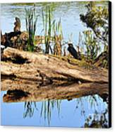 Swamp Scene Canvas Print by Al Powell Photography USA