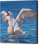 Swan Canvas Print by David Stribbling