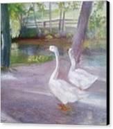Swans At Smithville Park Canvas Print