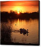 Swans At Sunset Canvas Print by Ed Pettitt