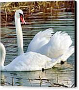 Swans Canvas Print by Gary Heller