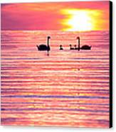 Swans On The Lake Canvas Print by Jon Neidert