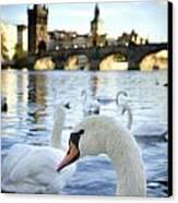 Swans On Vltava River Canvas Print by Jelena Jovanovic