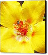 Sweat Bee On Rock Rose Two Canvas Print