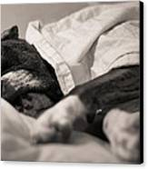 Sweet Sleeping Boxer Canvas Print