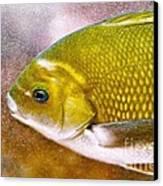 Swimming Fish  Canvas Print