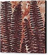 Sword Fern Fossil Canvas Print by Katherine Young-Beck