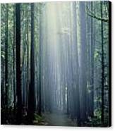 T. Bonderud Path Through Trees In Mist Canvas Print by First Light