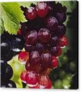 Table Grapes Closeup Canvas Print by Craig Lovell