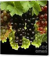 Table Grapes Canvas Print by Craig Lovell