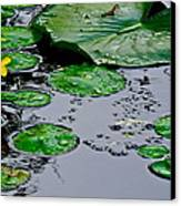 Tadpole Haven Canvas Print by Frozen in Time Fine Art Photography
