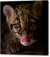 Taking A Licking Canvas Print by Ashley Vincent