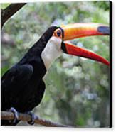 Talkative Toucan Canvas Print