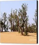 Tamarix Trees On Sand Dune  Canvas Print by Dan Yeger