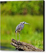Tantalizing Tricolored Canvas Print