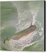 Tarpon Breaking Water Canvas Print