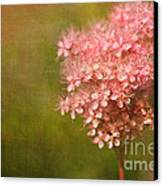 Taste Of Summer Canvas Print by Beve Brown-Clark Photography