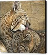 Tender Loving Care Canvas Print by Teresa Schomig