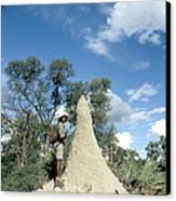 Termite Mound Canvas Print by Mark Newman