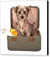 Terrier Dog In Suitcase Canvas Print by Susan Schmitz