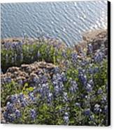 Texas Bluebonnets At Lake Travis Canvas Print