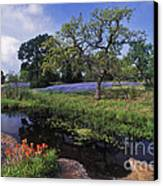 Texas Hill Country - Fs000056 Canvas Print by Daniel Dempster
