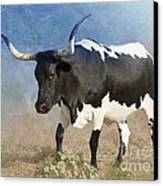 Texas Longhorn #7 Canvas Print by Betty LaRue