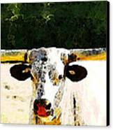 Texas Longhorn - Bull Cow Canvas Print by Sharon Cummings