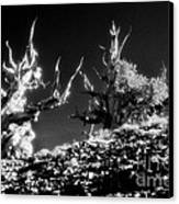 The Ancients - 1001 Canvas Print by Paul W Faust -  Impressions of Light