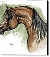 The Bay Arabian Horse 12 Canvas Print