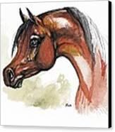 The Bay Arabian Horse 15 Canvas Print
