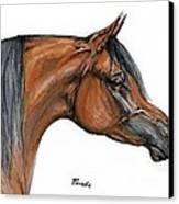 The Bay Arabian Horse 18 Canvas Print