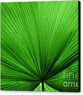 The Big Green Leaf Canvas Print by Natalie Kinnear