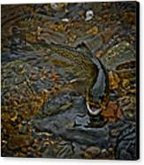 The Brown Trout Canvas Print by Ernie Echols