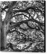 The Century Oak Canvas Print by Scott Norris
