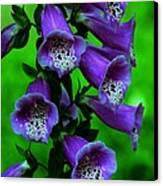 The Color Purple Canvas Print by Kathleen Struckle