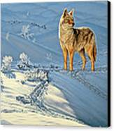 the Coyote - God's Dog Canvas Print by Paul Krapf