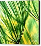 The Dandelion Canvas Print by Odon Czintos